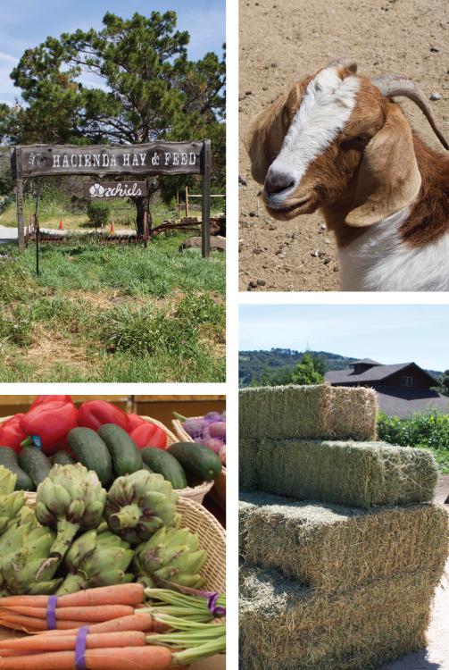 Hacienda Hay and Feed