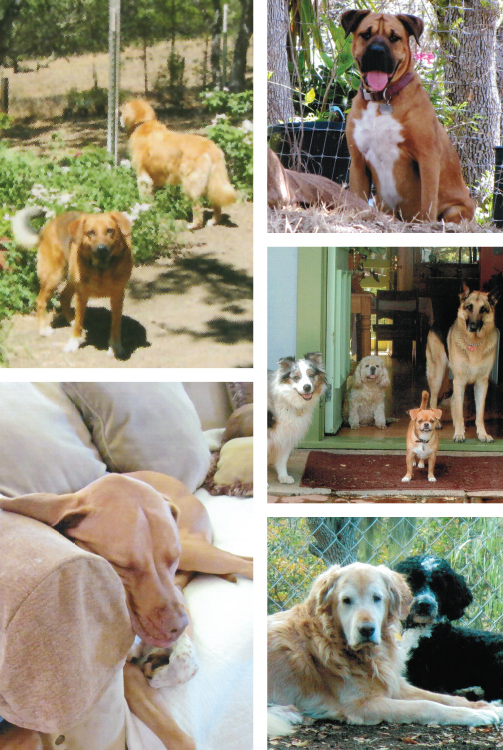 Carmel Valley Doggie Bed & Breakfast