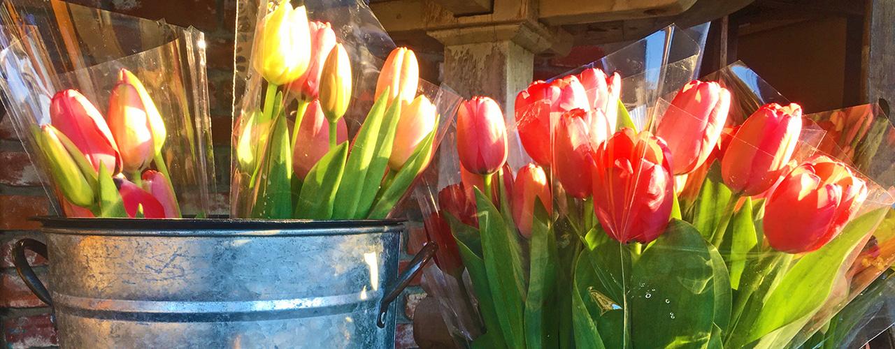 Jeromes-CV-Market_Tulips_slider01_1280x500